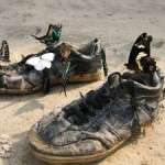Butterfilies attracted to old hiking shoes